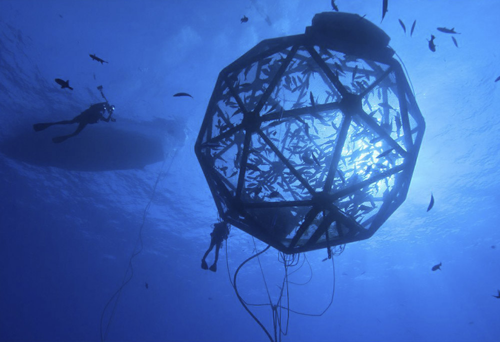 Aquaculture-Risk-Management