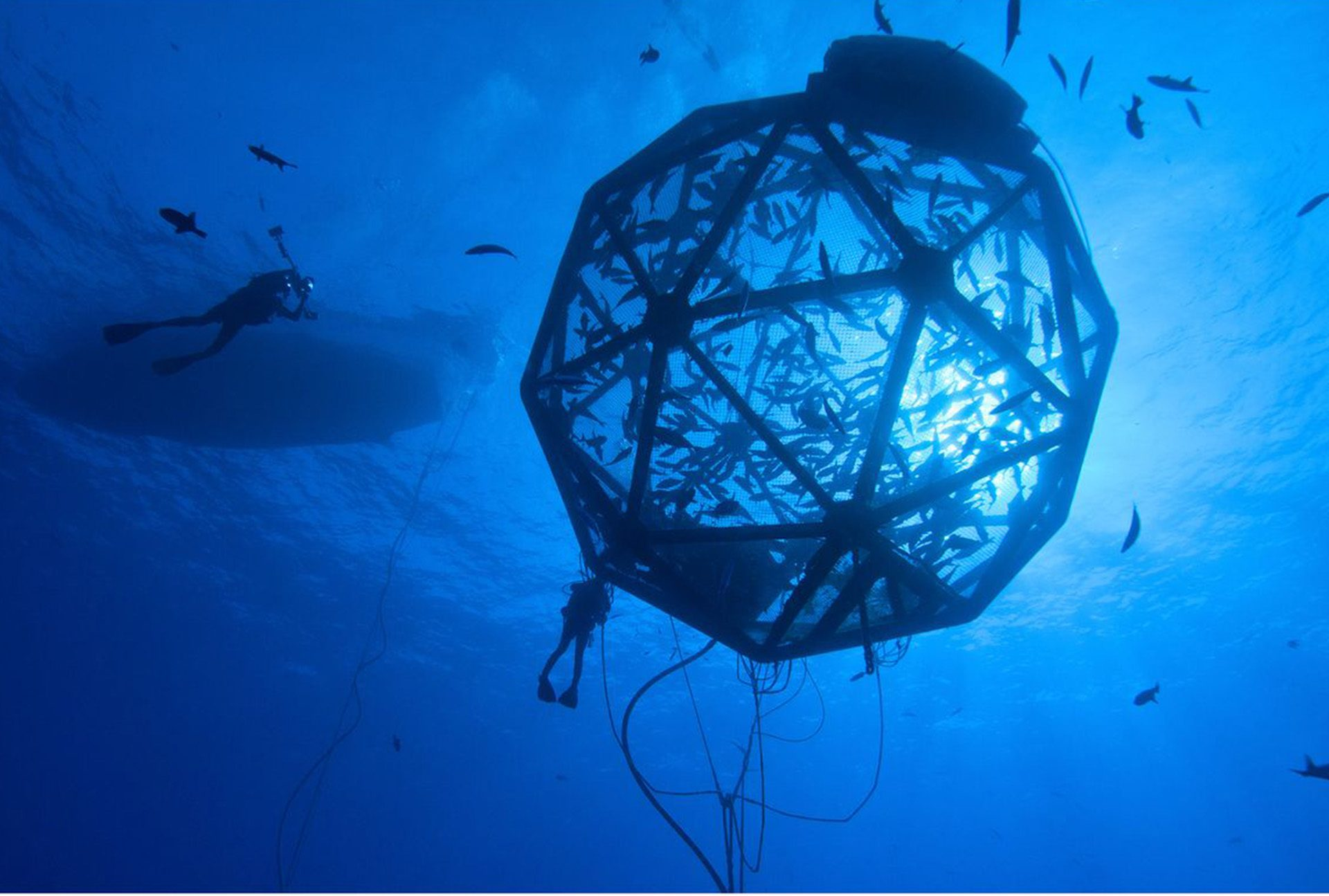 Aquaculture Risk Management